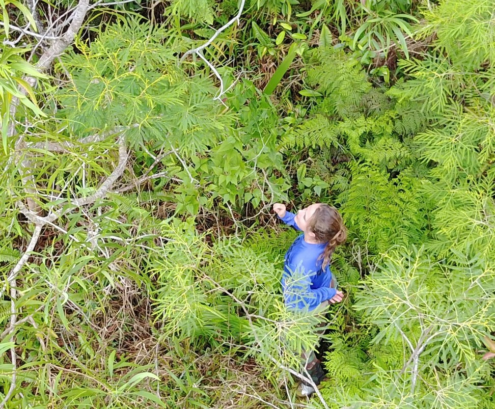 UAV imagery of field crew inspecting devil weed.