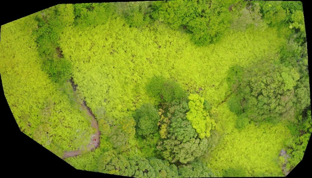 An orthorectified image from an autonomous mapping flight.