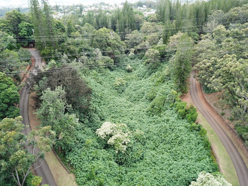 A UAV survey area with challenging vegetation, residences and hazards (powerlines) in close proximity.