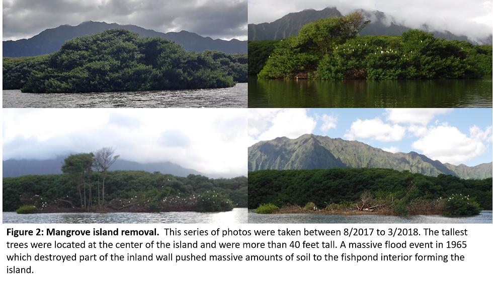 Figure 2: Mangrove island removal.  This series of photos were taken between 8/2017 to 3/2018. The tallest trees were located at the center of the island and were more than 40 feet tall. A massive flood event in 1965 which destroyed part of the inland wall pushed massive amounts of soil to the fishpond interior forming the island.
