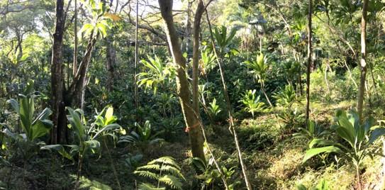 'Aihualama Inter situ Site