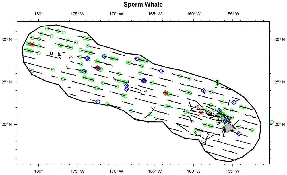 Sightings and acoustic detections of sperm whales.