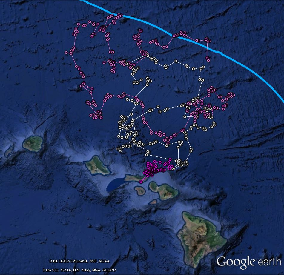 Location data recorded from satellite tags deployed on short-finned pilot whales, n=3.
